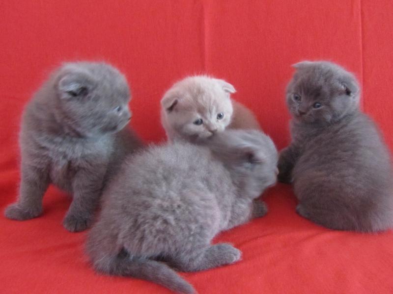 успокаивают нервы фото вислоухих котят из питомников пост касался переживаний
